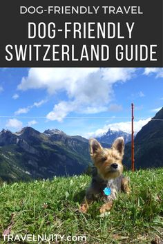 Looking for one of the most dog-friendly countries anywhere to travel with your dog? Then book your next trip to dog-friendly Switzerland!