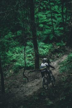 Into the ferns. Rider: Dylan Lombard Photo by: Eeric Sandstrom