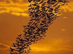 100,000 Bats Fall from the Sky in Australia Due to Extreme Heat Wave - http://notexactlythenews.com/2014/01/10/an-alternate-viewpoint/100000-bats-fall-from-the-sky-in-australia-due-to-extreme-heat-wave/