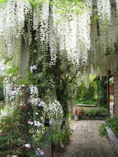Heavenly Tree Shrouded Garden Area!