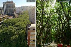 green-tunnel-street-porto-alegre-brazil-1
