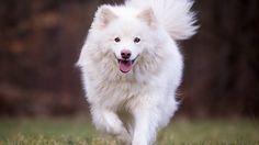#Tier #Magazin: Auch der Hund benötigt eine ausgewogene Ernährung - https://www.tier-magazin.com/3902-auch-der-hund-benoetigt-eine-ausgewogene-ernaehrung.html - #AusgewogeneErnährung, #Hundefutter, #Hundenahrung