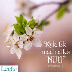 Afrikaans Quotes, Me Quotes, Death, Bible, Van, Creative, Biblia, Ego Quotes, Vans