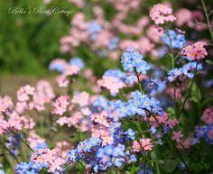 Bella's Rose Cottage: Lost in the Garden...