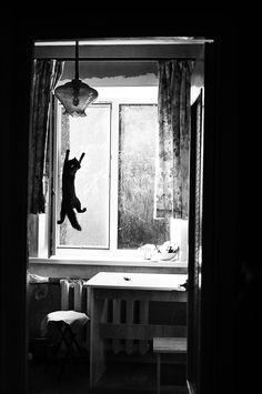 catching flyes by Irina Ivanova, via 500px