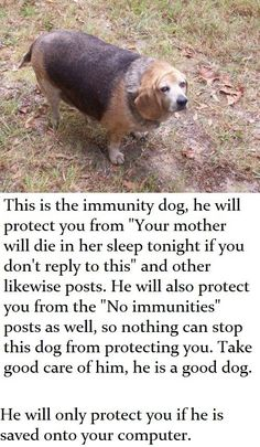 This is the immunity dog, he will protect you from 'Your mother will die in her sleep tonight if you don't reply to this' and other likewise posts.
