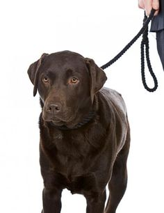 The Dog Trainer : 4 Tips to Handle Your Lunging, Barking Dog :: Quick and Dirty Tips ™