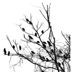 tree art black and white - Google Search