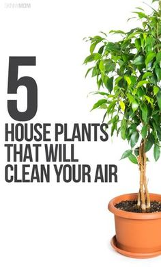 Keep these plants in your home to clear the air!