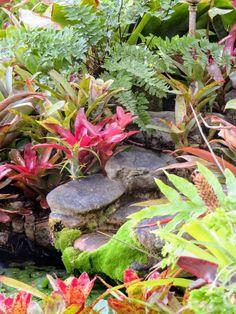 Bromeliads,  ferns, water feature