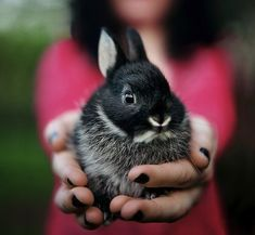 A girl holding out a black and white, small rabbit towards the camera.