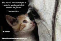 Los ojos del Señor están sobre los justos...Proverbios 15.30