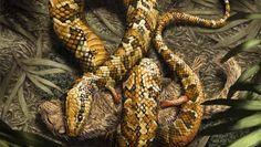 Fossil shows prehistoric snake had four feet - CBS News