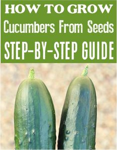 How to Grow Cucumbers From Seeds! Raised bed gardening from scraps in containers is so easy! Cucumber vines on a trellis are the best! Raised Bed, Raised Garden Beds, Gardening For Beginners, Gardening Tips, Easy Garden, Summer Diy, Hydroponics, Trellis, Amazing Gardens
