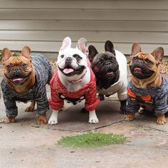 Sweaters On and Ears Up, It's Fall!