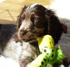 Můj pes : Výživa : Vánoční sušenky pro psy Mans Best Friend, Best Friends, Dog Love, Dog Cat, Puppies, Pets, Animals, Beat Friends, Bestfriends