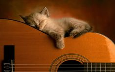 Un gato y guitarra wallpaper