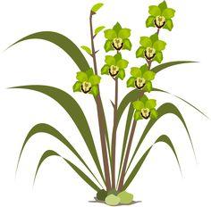Clipart, Flor, Flora, Naturaleza, Orquídea, Orquídeas