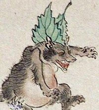 The shape-shifting Tanuki is said to put leaves on its heads and to chant prior to transformation -- just as the fox must balance a human scull and bones atop its head before shape shifting. In some legends, the leaf is the sacred lotus plant of Buddhism. It is also believed that Tanuki can change leaves into money.
