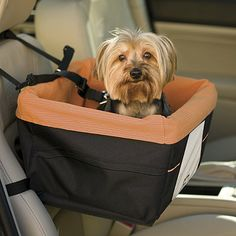 This made me laugh out loud.  Skybox Pet Booster Seat
