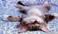 sleep_cat.jpg