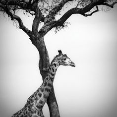 60 Inspiring Examples of Black and White PhotographyThe Photo Argus - A Photography Resource Blog | Inspiration