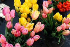 Tubs of Tulips...MY FAVORITE!!!!