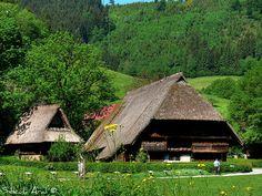 Schwarzwald/ Black Forest