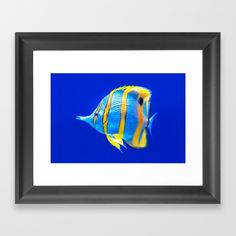 Copper-Banded Butterfly Fish Framed Art Print
