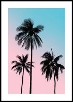 Pink palm sky Julisteet
