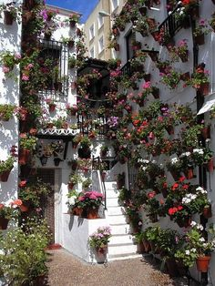 Festival of the Patios, Cordoba, Spain Cordoba Andalucia, Andalusia Spain, Beautiful Gardens, Beautiful Flowers, Beautiful Places, Spain And Portugal, Flower Pots, Potted Flowers, Potted Plants