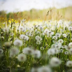 in the fields | Sophie Thouvenin #photography