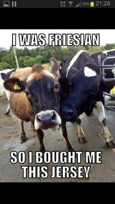 Fresian cows!!