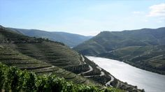 What makes Douro wines so unique ? - video by Fabien Laine Portugal, Port Wine, Royalty Free Music, Wines, Mountains, Unique, Places, How To Make, Travel