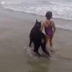 wow amazing dog trying to save the baby from danger - Tiere - Hunde bilder Cute Animal Videos, Funny Animal Pictures, Cute Funny Animals, Cute Baby Animals, Funny Dogs, Animals And Pets, Fluffy Animals, Cute Puppies, Cute Dogs