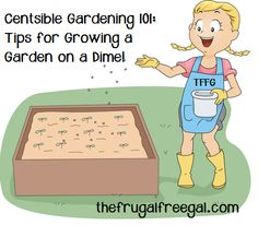 Centsible Gardening 101: Tips for Growing a Garden on a Dime!