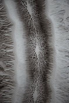Beeindruckende Mikrobenwelt aus Papier