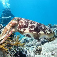 Fun Dive Padang Bai US$115 / Discover Scuba Diving US$120