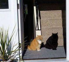 shadow cat #1