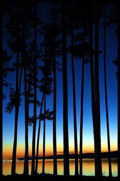 Twilight Thru the Trees, Lake Guntersville, Alabama