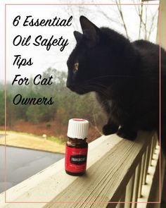 Curiosity killed the cat. And essential oils can too if you're not careful. Read on to learn which oils could be slowly killing your favorite kitty friends.