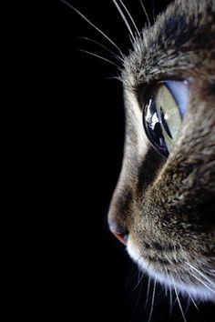 Me encanta esta foto, la claridad del ojo es impresionante...
