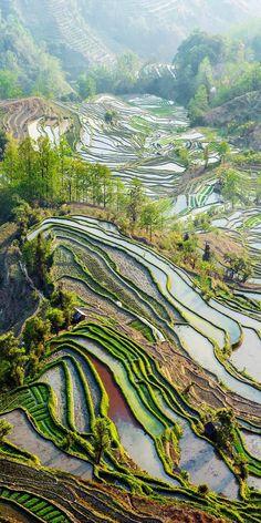 "Yuan Yang Terraços do arroz - ""boca do tigre"" sob o pôr do sol na província de…"