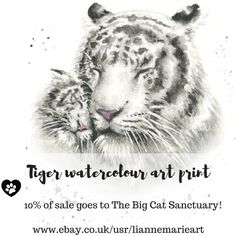 White tiger giclee art prints from original animal art. 10% of proceeds go straight to The Big Cat Sanctuary Kent UK. cat rescue animal rescue conservation big cats