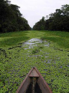 ¿Qué tal un paseo por este hermoso paisaje del Amazonas?