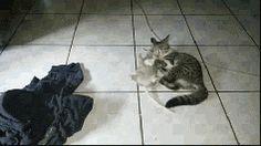 No, Its Mine!