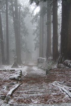 The forrest and winter, the only place I can feel safe and at peace. like stepping into a different world. A quiet world, full of mystery, and the embrace of the ice. A world with out pain, with out memories, with out debt and worries.