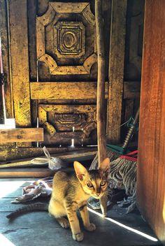Bhuddist Cat