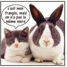 chat-lapin-humour-drole-blague chat trop mighonchat trop mignon et drole trop mignon dessinphoto de chat mignon et rigolochat drolevideos de chats trop mignonschat mignon dessin Kittens Cutest, Cute Cats, Funny Cats, Animals And Pets, Funny Animals, Cute Animals, Funny Shit, Funny Jokes, Hilarious