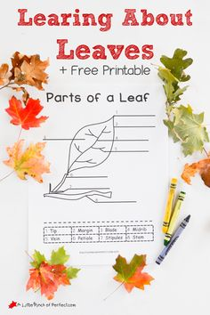 About Leaves Explore Color and Label Free Printable for Kids Learning About Leaves Explore Color and Label Free Printable for Kids A Little Pinch of PerfectLearning Abo. Fall Preschool, Preschool Science, Teaching Science, Science For Kids, Montessori Science, Preschool Rooms, Science Fun, Elementary Science, Nature Activities